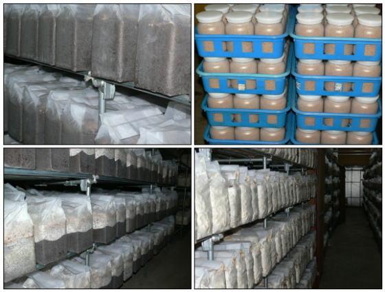菌糸ビン(菌糸ビン) 製造工場